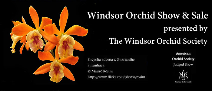 Orchid Show and Sale presented by The Windsor Orchid Society