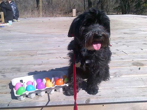 National Service Dogs Easter Egg Hunt Windsor