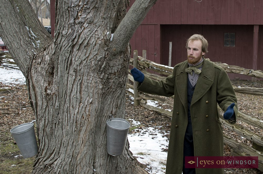 Pioneer explains how maple sap to be used to make maple syrup is extracted from maple tree.