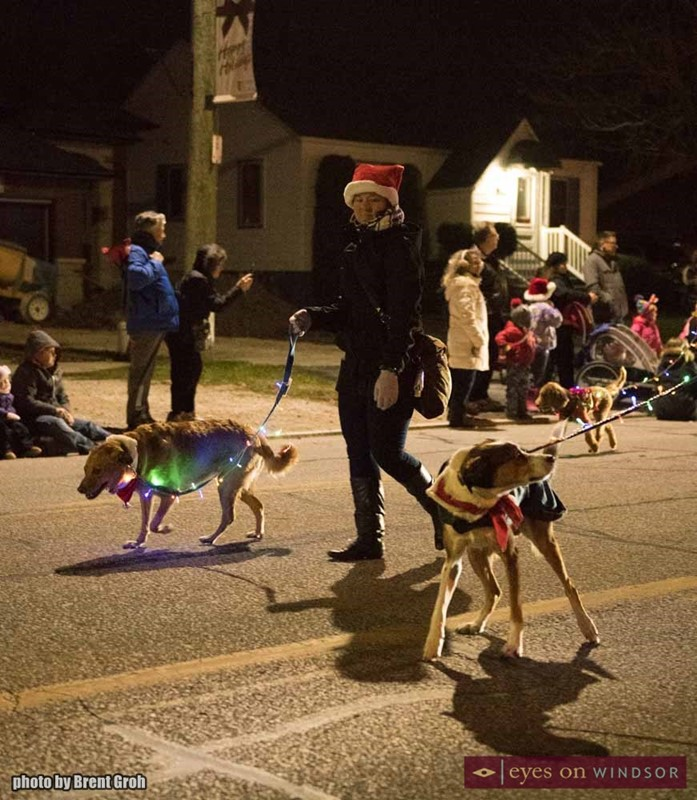 Dogs During Christmas in Tecumseh Parade.