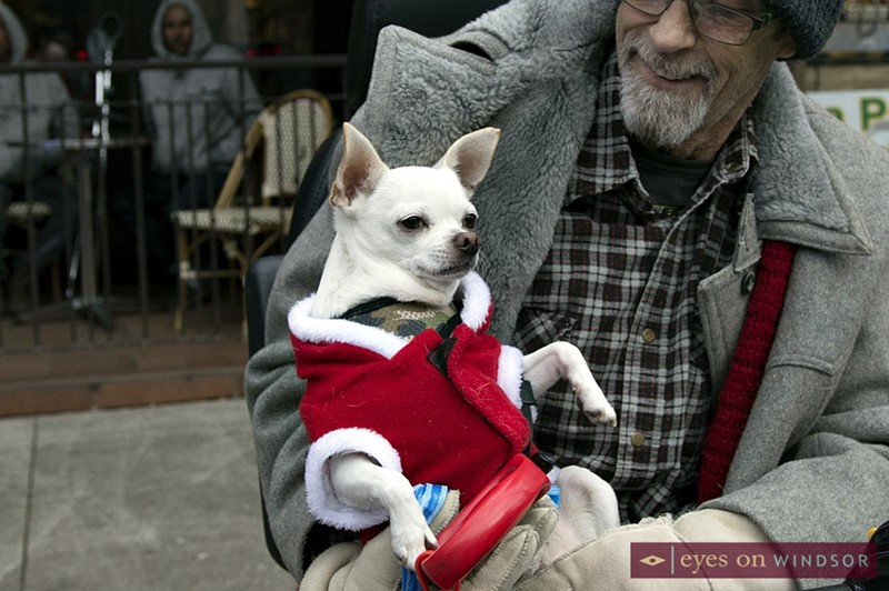 Man Holding Chihuahua Wearing A Santa Coat During Windsor Winter Fest Parade