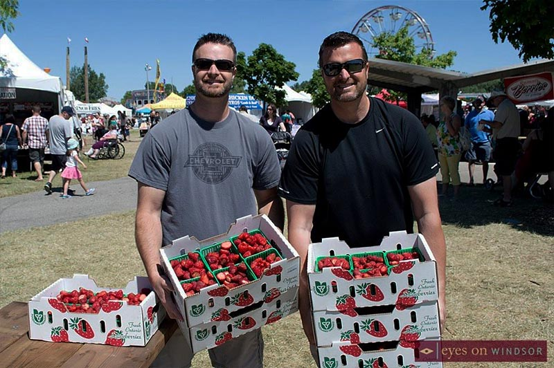 Volunteers carrying cases of strawberries during the Lasalle Strawberry Festival.