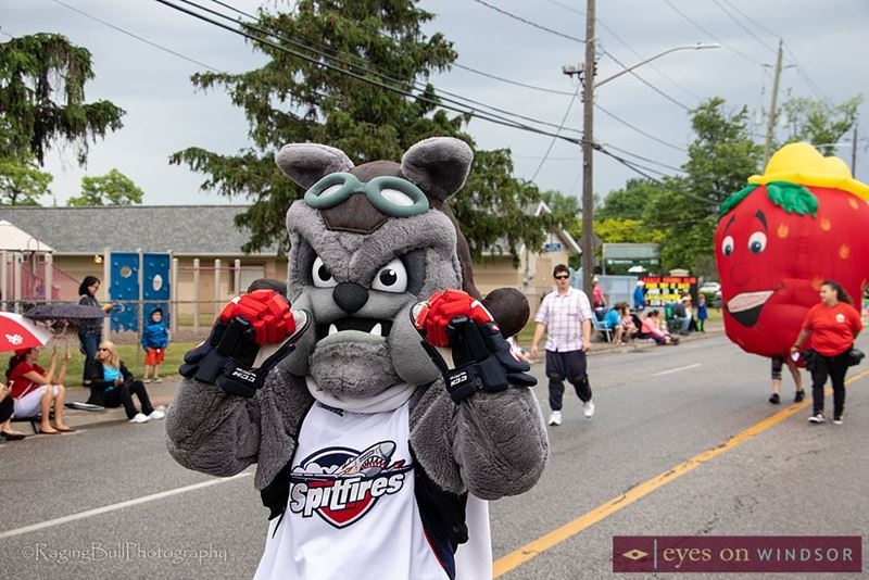 Windsor Spitfires Mascot Spike