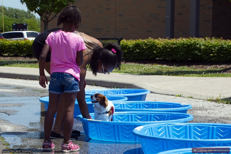 Dog cooling off in a swimming pool at Woofaroo Pet Fest