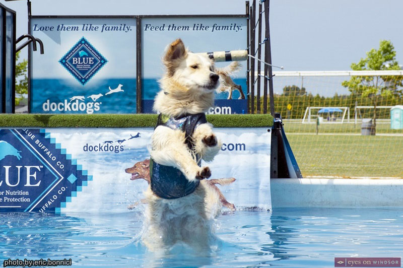 Dock Dogs Diving at Woofaroo Pet Fest