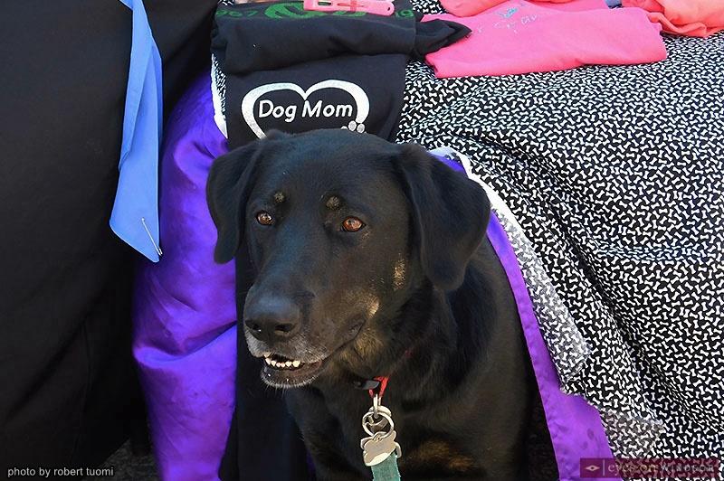 Emma the Dog, Mascot of Emma's Dog Treats