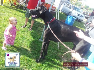 Zeus the world's tallest dog at Woofa Roo Pet Festival in Amhersburg