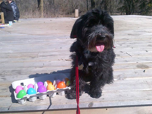National Service Dogs Easter Egg Hunt Windsor