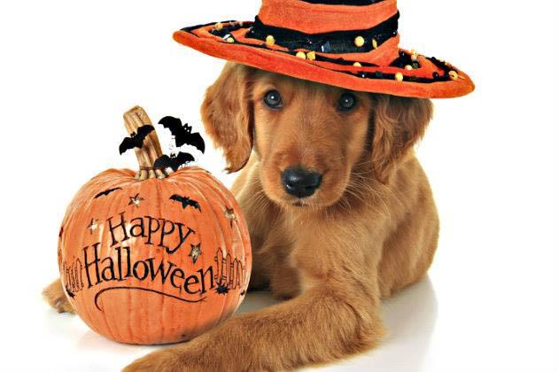 Animal Antics Howl-O-Wine Halloween Party and Anniversary Celebration