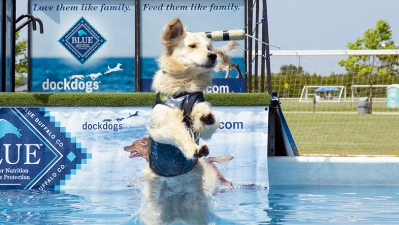 Woofaroo Pet Festival Was Hot And Fun All In One In It's 7th Year